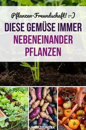 28 types of vegetables and their most effective mixed culture partners  example plan you ask   Vegetables