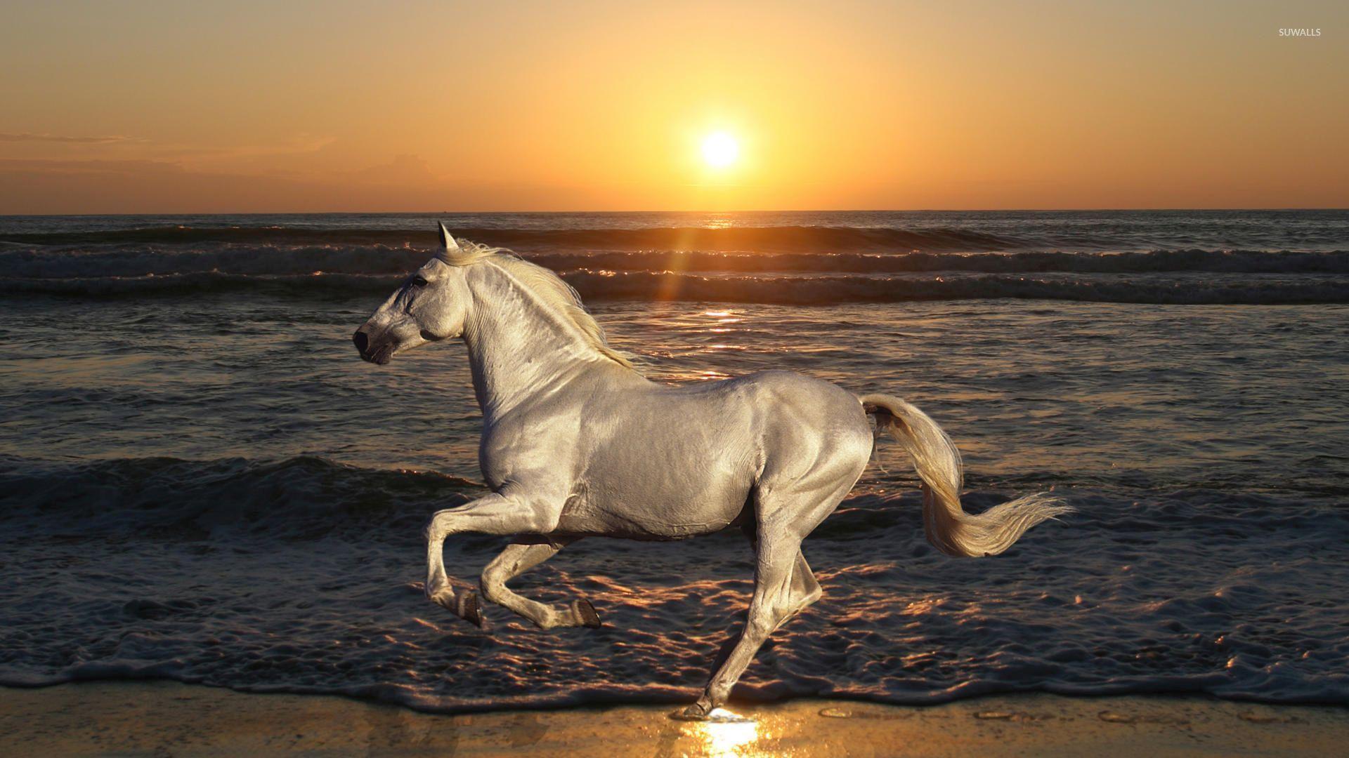 Simple Wallpaper Horse Beach - 1b1eaeb6a7496e7fb2bc336bfdb15ed9  Image_64145.jpg