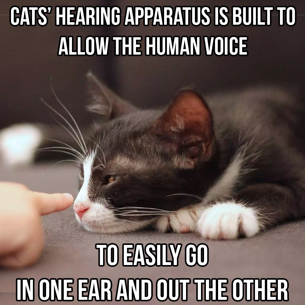 Catsmemes Catsgifmemes Funny Animal Pictures Cat Memes Cats