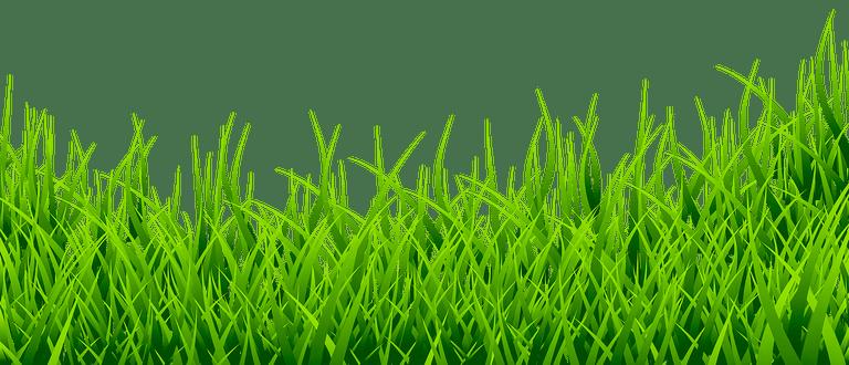 Picsart Png Grass Clipart Grass Vector Blur Photo Background