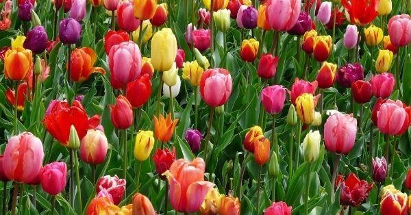 5 mehrjährige Gemüse und Blumen, die Jahr für Jahr wachsen werden#blumen #die #für #gemüse #jahr #mehrjährige #und #wachsen #werden