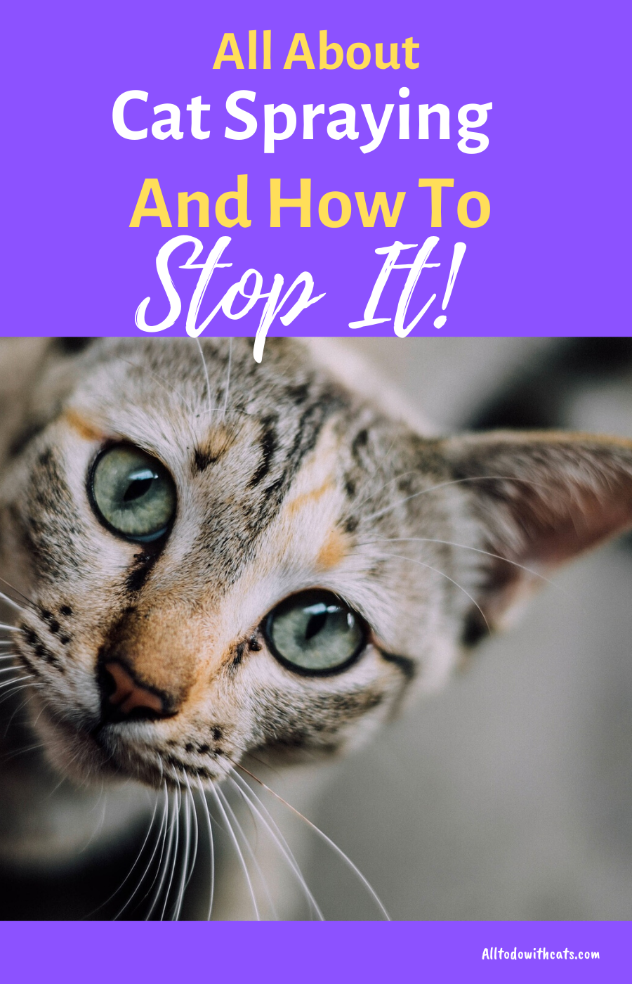 Why Do Cats Spray Indoors And How To Stop It Cat care