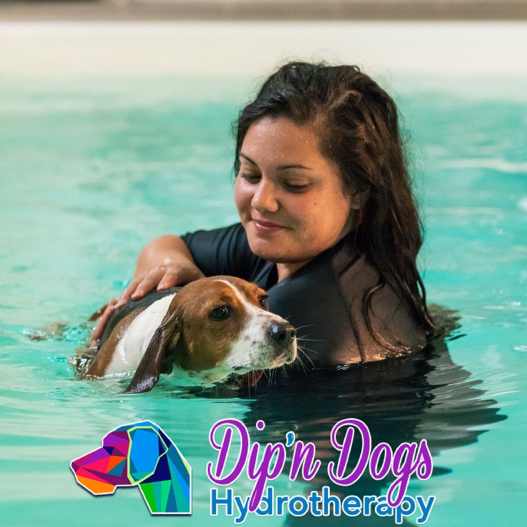 In Home Hydrotherapy 40 Swim 4 Pack Dogs Your Dog Swimming