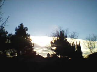THOSE ARE PINE TREES AND BEHIND IS CLOUDS IT LOOKS LIKE SNOW. LOVE IT