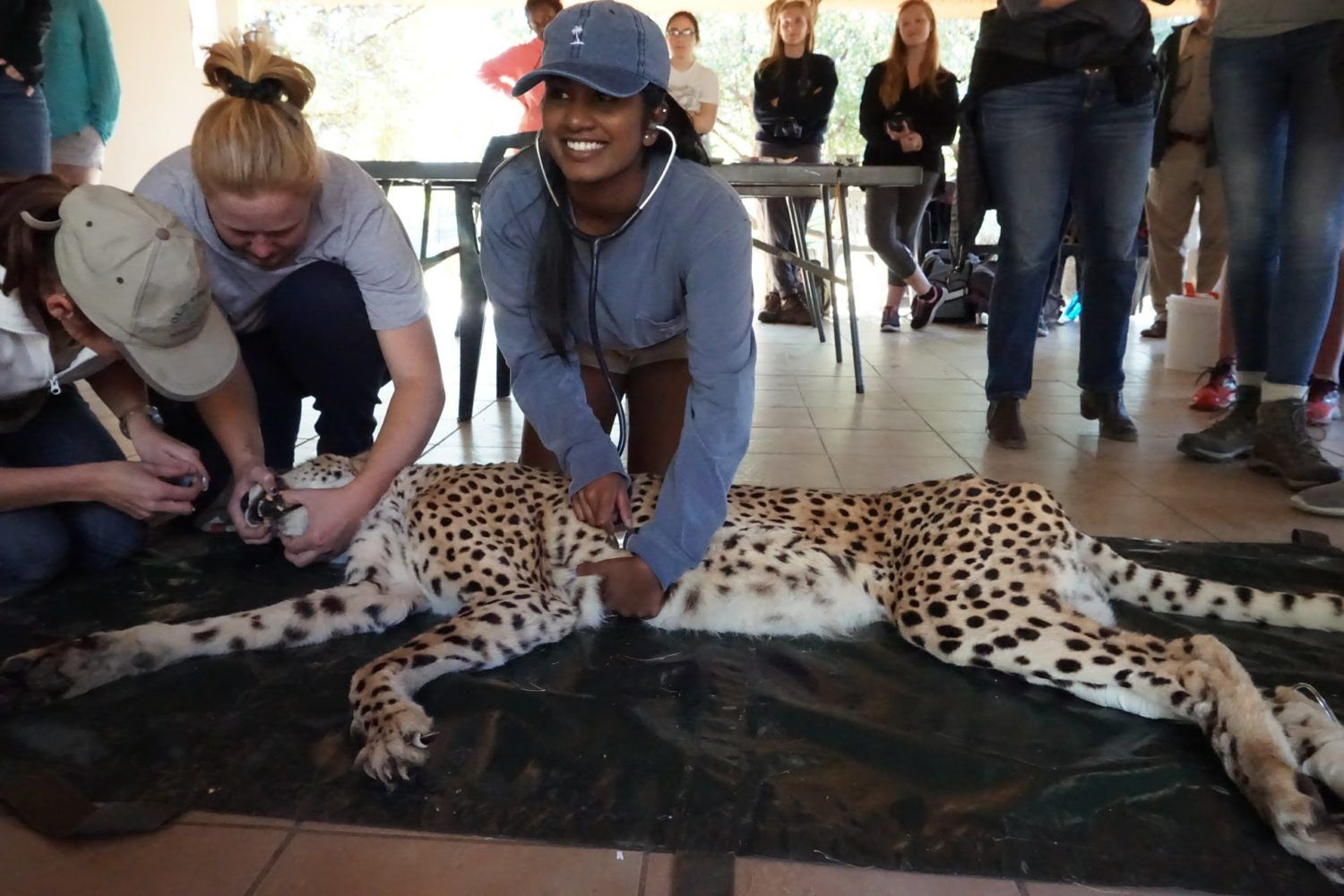 Veterinary Service in South Africa Loop Abroad in 2020