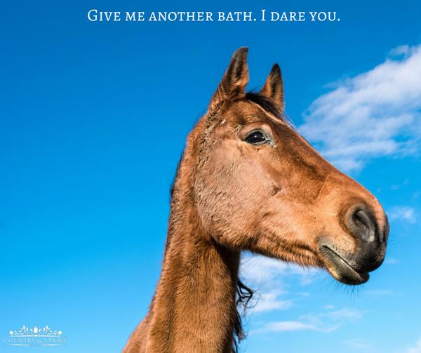 Horse Addiction ♥ (@horsequotediary)   Twitter