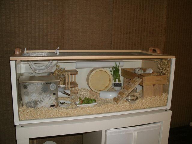 Ikea billy roborovski hamster cage hamster pinterest for Ikea hamster cage