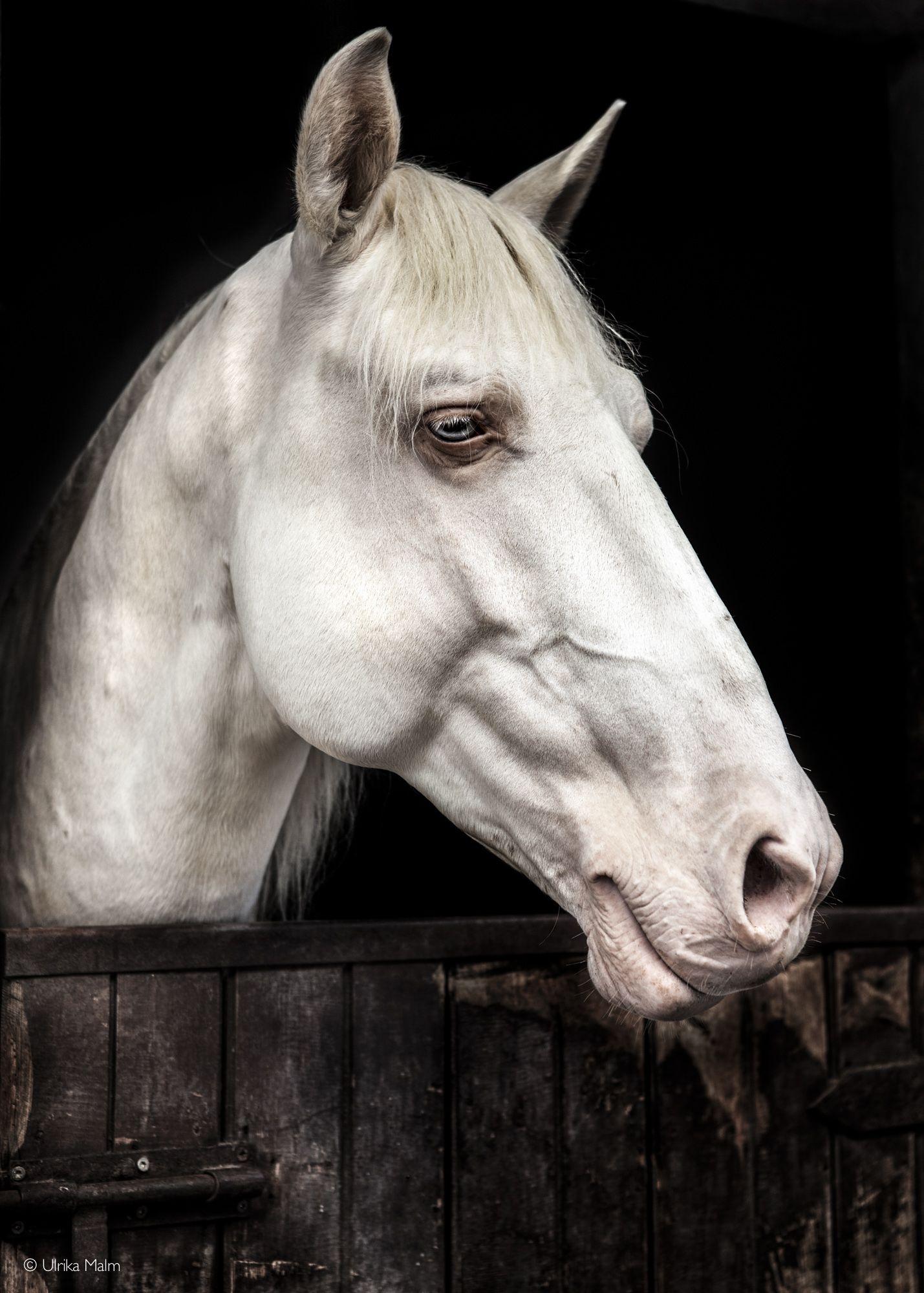 может фото головы белого коня кладбище надо
