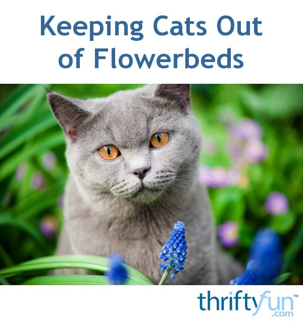 Keeping Cats Out of Flowerbeds | Cats, Flower beds, Kitty