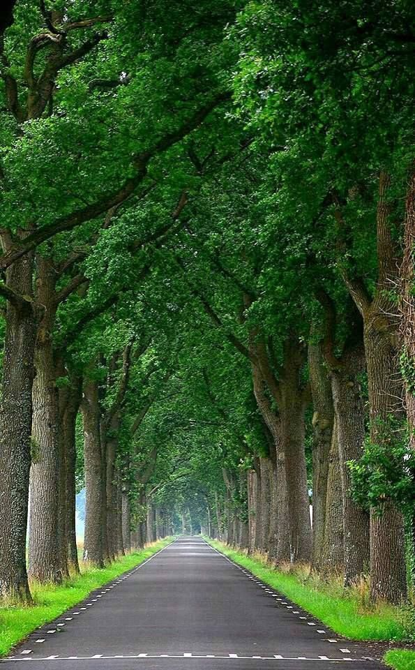 Image May Contain Tree Plant Sky Outdoor And Nature Nature Photography Trees Forest Photography Nature Photography Quotes