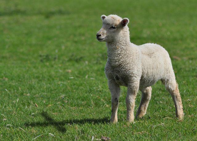 Lamb of God..!!!  (cross reflection <3)