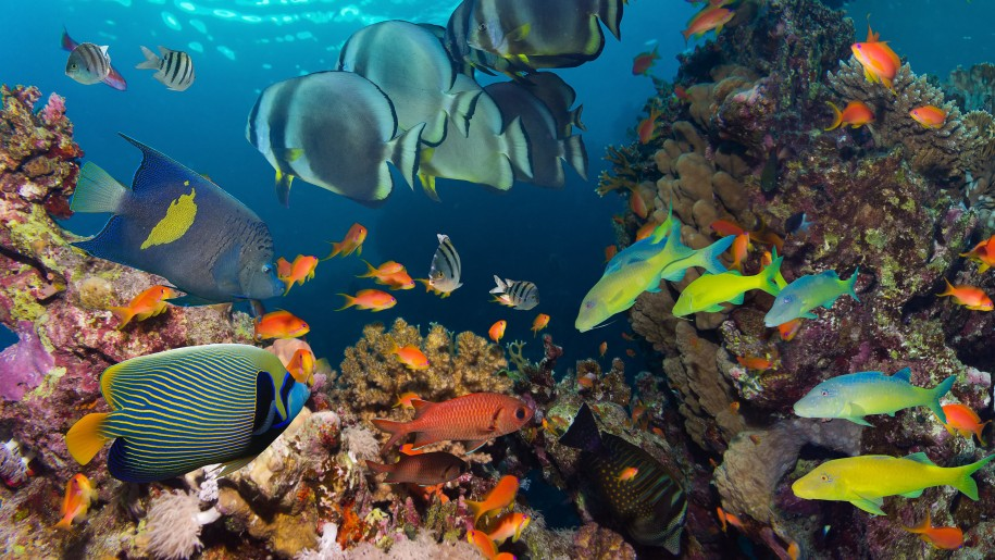 Ocean Underwater Tropical Reef Fish Colorful Coral Wallpaper Hd