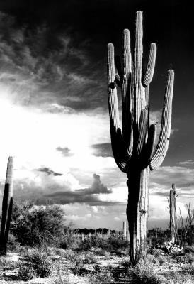 Arizona Desert Archival Photo Poster