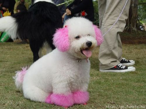 Color Dyed Dogs Dyed Dogs Tumblr Funny Animals Dog Tumblr