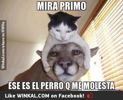 Winkal Share The Fun Meme Gato Gatitos Divertidos Memes Animales