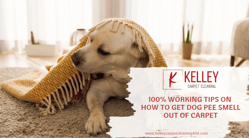 100 Working Tips On How To Get Dog Pee Smell Out Of Carpet Dog Pee Smell Dog Pee Pee Smell