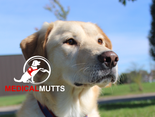 Do You Have A Dog That Could Be Trained As Your Service Dog Certified Trainers Aaa We Can Do All Agility Training For Dogs Dog Training Autism Service Dogs