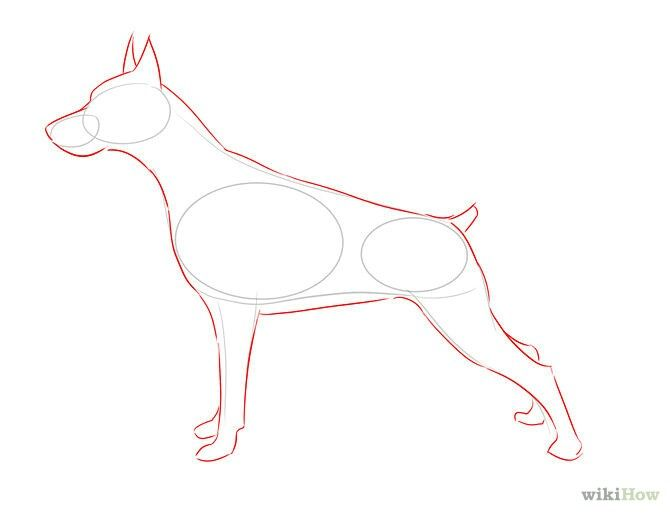 How To Draw A Doberman Animal Drawings Realistic Drawings Dog