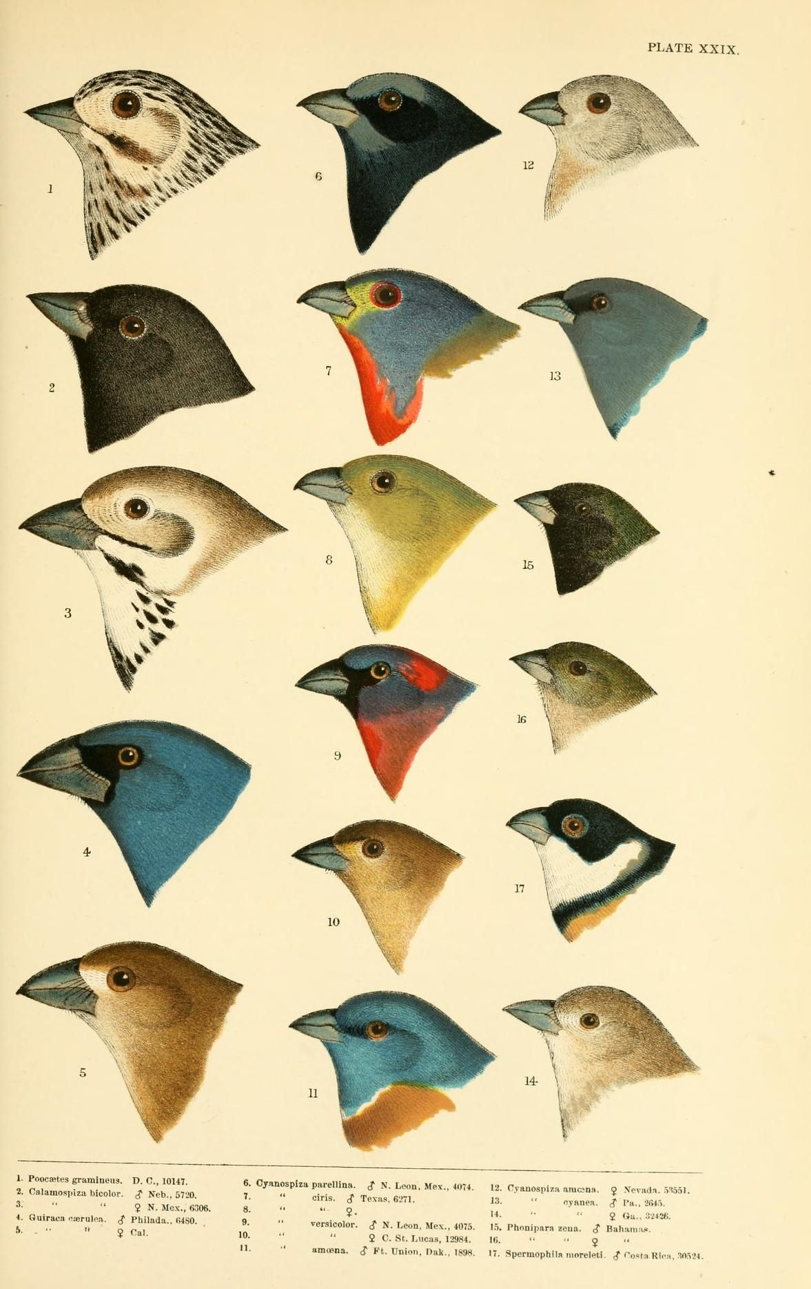 Photo of A history of North American birds v.2  Boston :Little, Brown,1905.  Biodiversity…