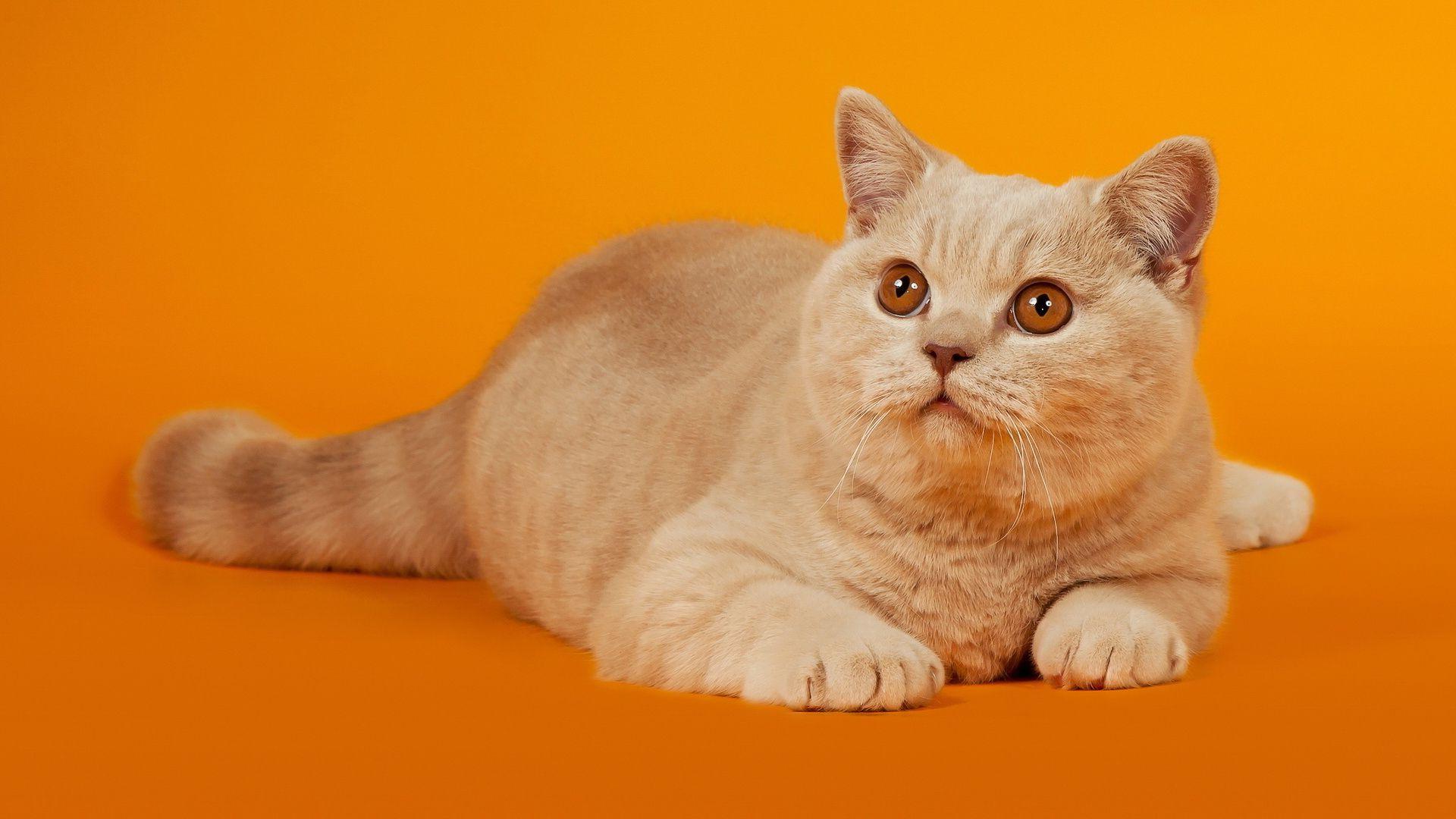 Cute Cats Desktop Wallpaper Pinterest Funny Animal Animal