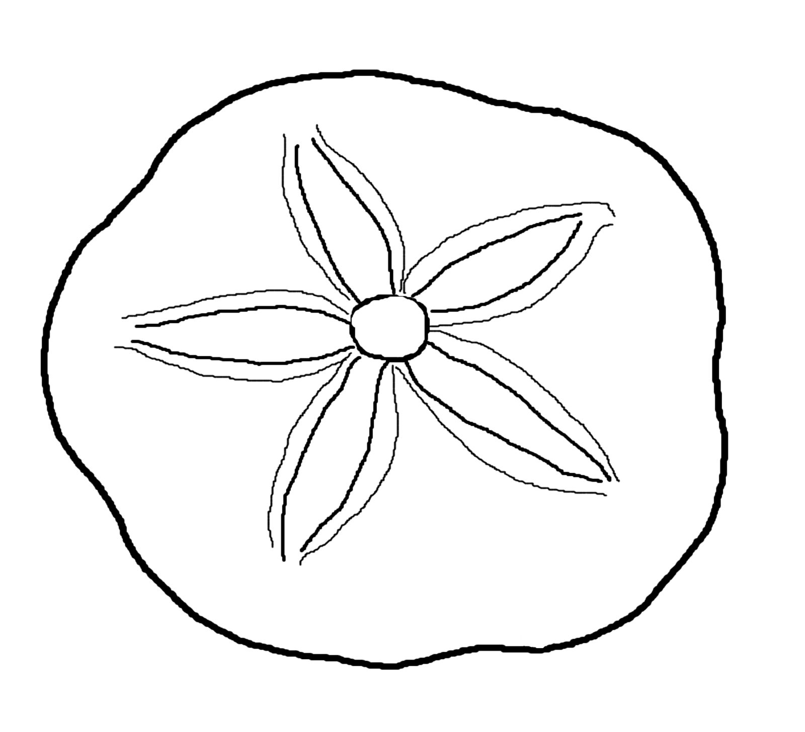 Sea Life Clipart Sand Dollar