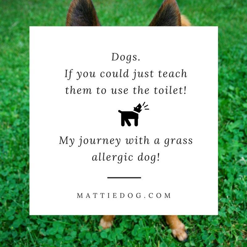 The Pet Lifestyle Guru Dog grass allergy, Dog health