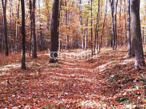 #autumn #background #beatiful #carpet #colour #forest #gold #leaf #nature #october #orange #park #scene #season #tree #wood #yellow