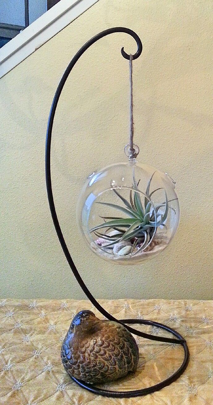 Love this hanger/stand for this air plant in a glass globe.  Although air plants are not succulents, some are nearly care-free.  Such is the case if outside under a shady tree, where they regularly get dew moisture, occasional misting and rain.  I mist the ones I have in my home, at least once or twice a week, along with occasional soaking.