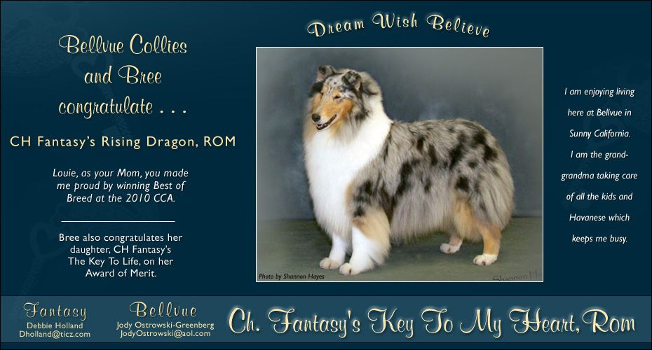 Beautiful Blue Collie Rough Collie Animals And Pets
