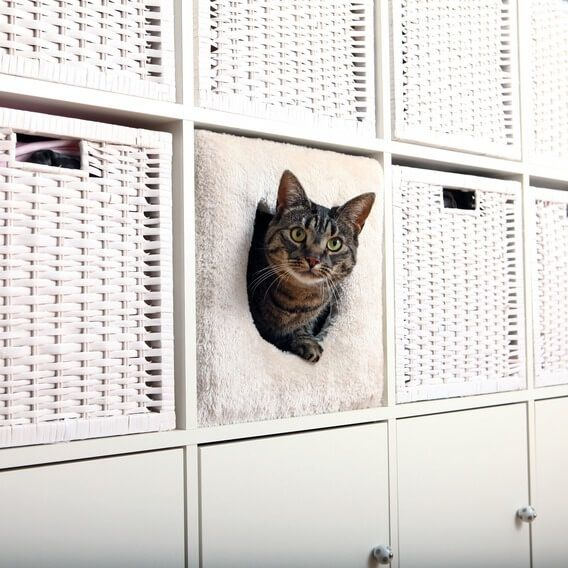 Abri chat douillet cube zoomalia