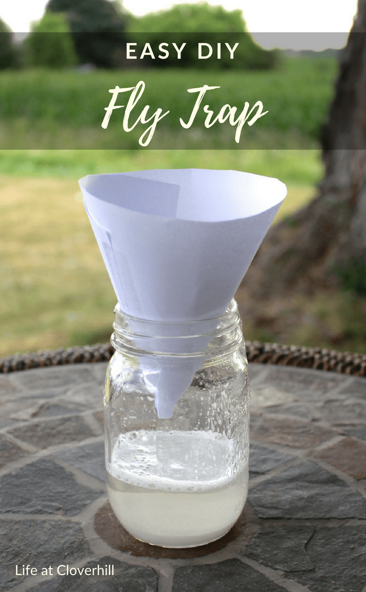 Easy Diy Fly Trap Fly Traps Homemade Fly Traps Home Remedies For Flies
