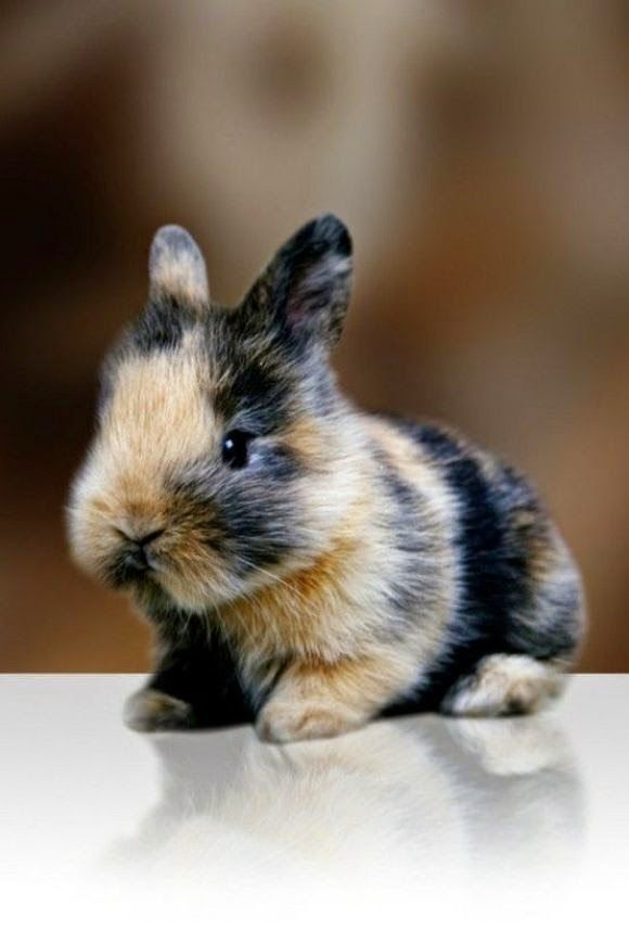 Top 5 Best House Pets Cute Animals Animals Cute Baby Animals