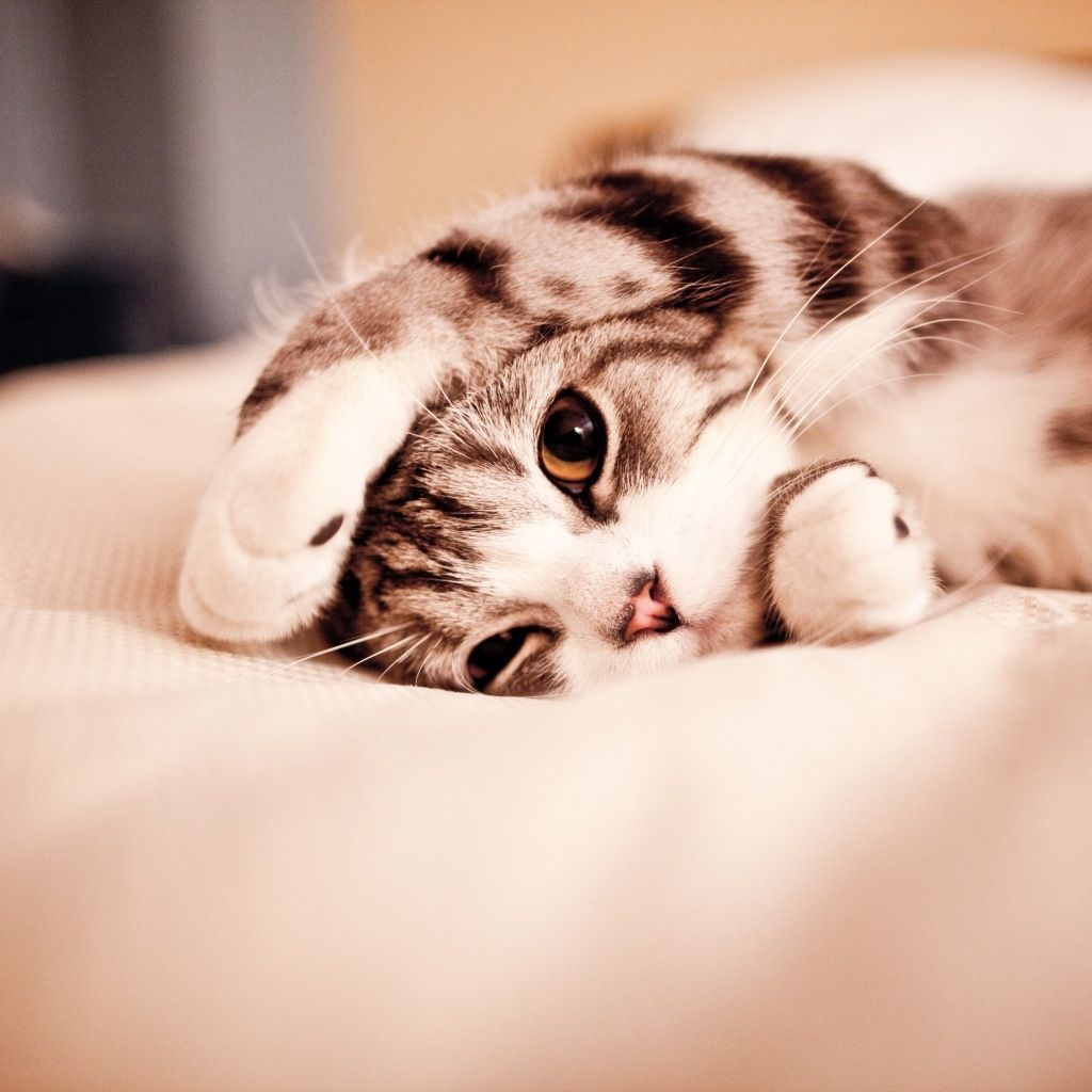 I M Trying To Sleep Kittens Cutest Cats Cute Animals