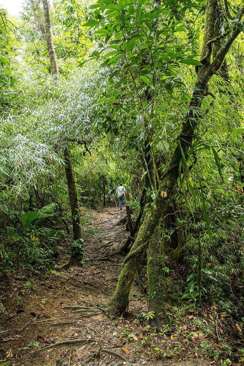 Senderos dentro del la reserva Montes Azules en Chiapas