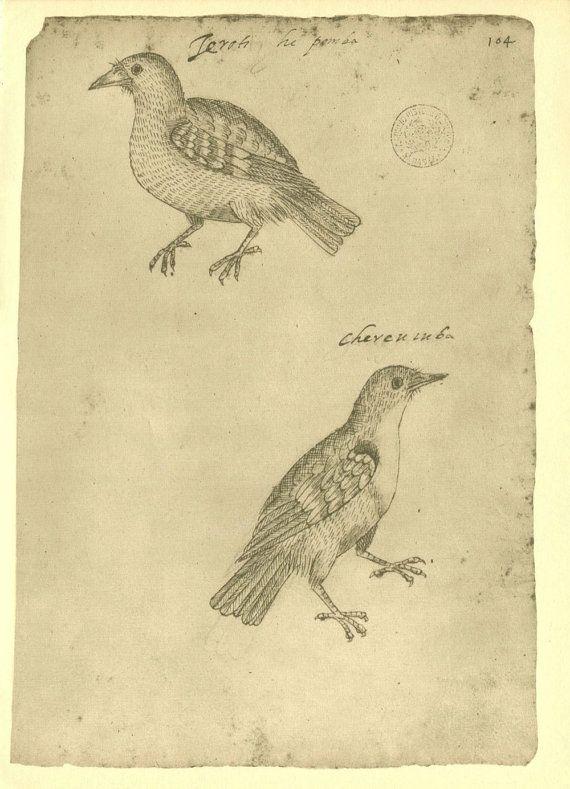 Vintage Prints of Birds  Facsimile of a  Sketch by CarambasVintage