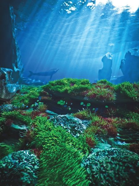 How To Create Realistic Underwater Landscapes In Vue Underwater Drawing Underwater Fishing Photography