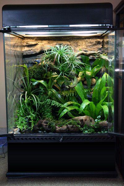 Exo Terra Dripper Plant Drip Watering System: 12x12x18 Exo Terra Tank Builds T Vivarium Snake
