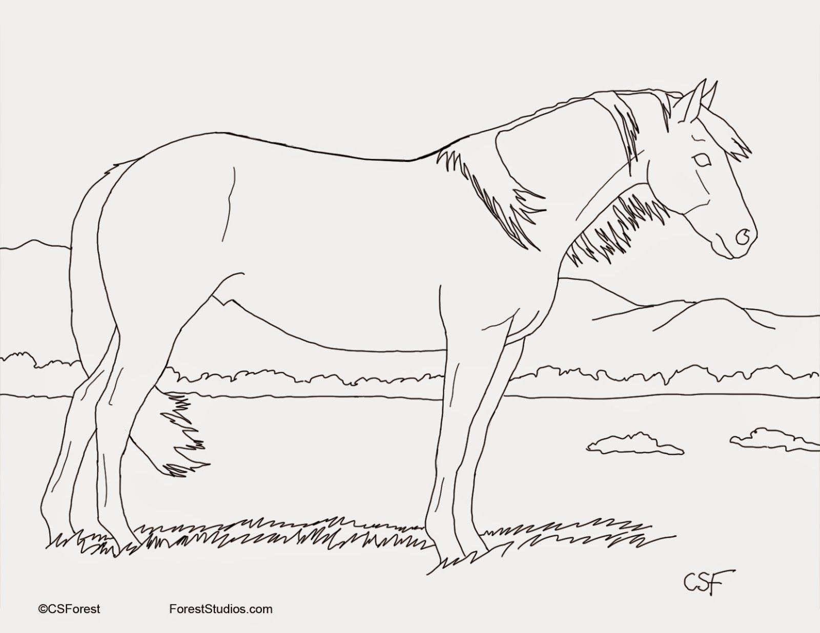 Forest Wildlife Art Coloring Book Page Buckskin Mustang Coloring Books Coloring Book Pages Wildlife Art