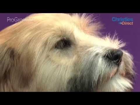 Grooming Guide Tibetan Terrier Puppy Trim Progroomer Dogs With Images Puppy Grooming Tibetan Terrier Dog Groomers