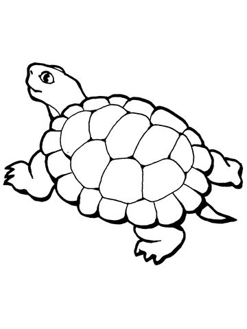 Walking Tortoise Coloring Page Music Coloring Music Coloring Sheets Turtle Coloring Pages