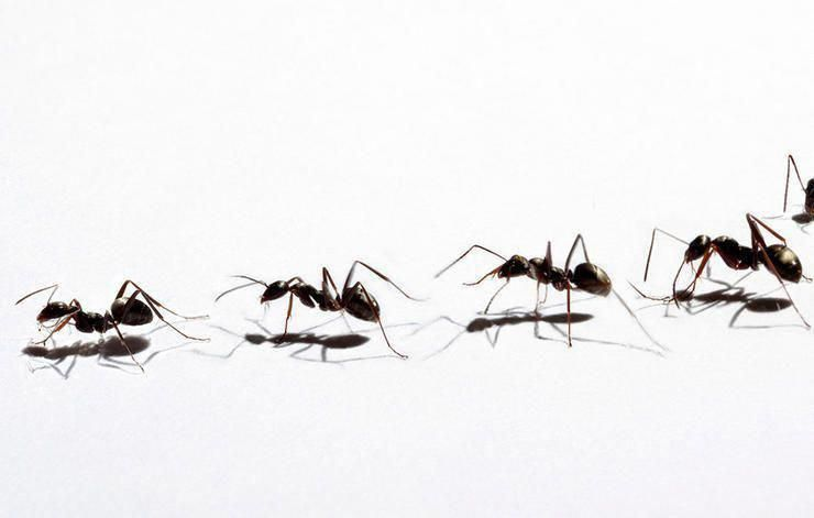 The Basics Of Pest Control Ant Pest Control Pest Control Rid Of Ants
