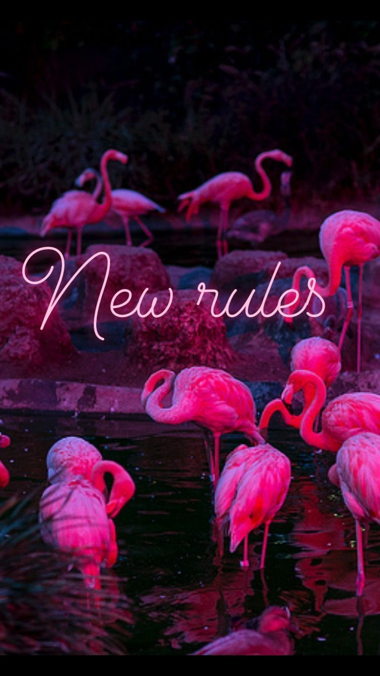 Newrules Flamingo Dualipa Neon 4k Newrules Flamingo