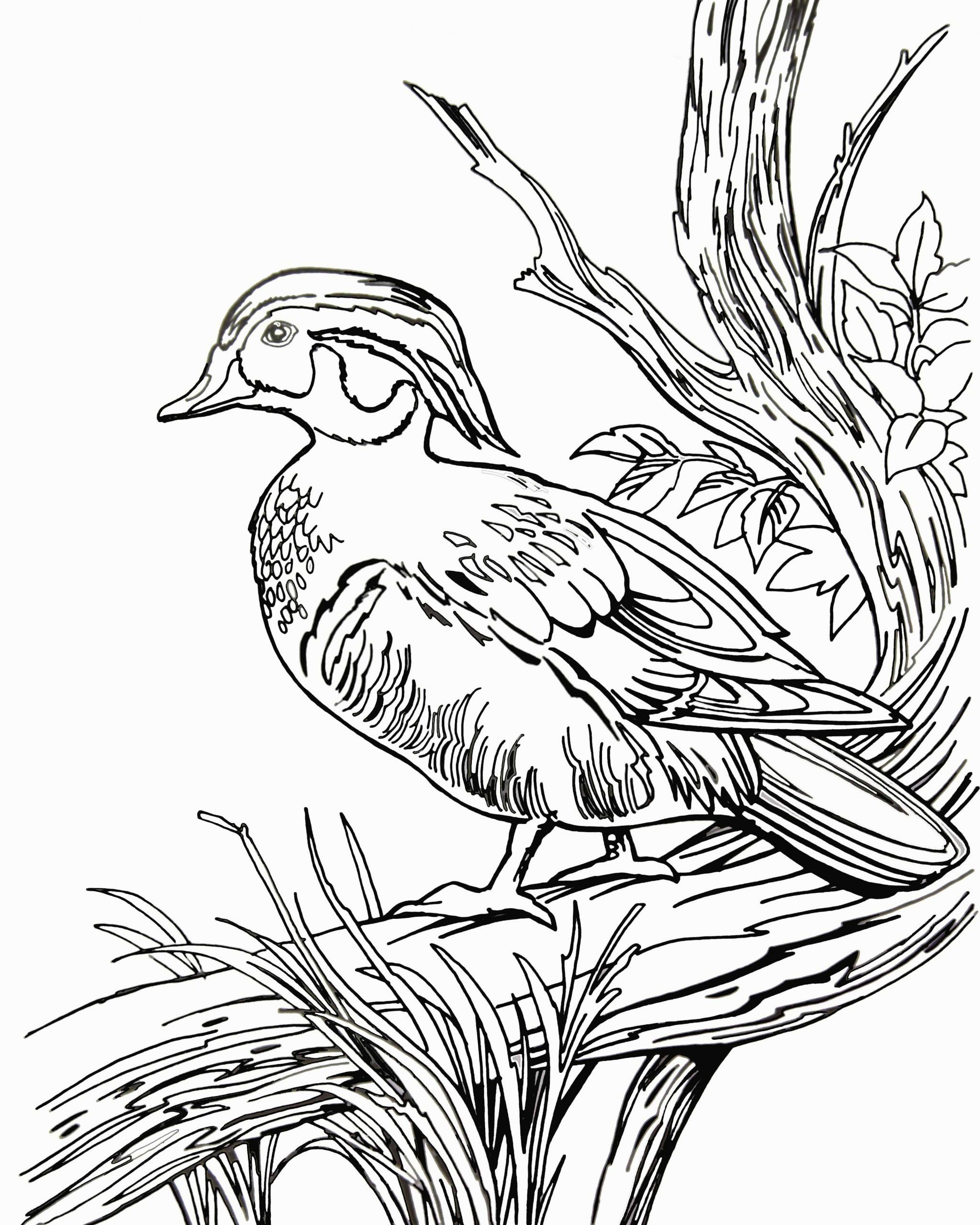 Flying Mallard Duck Coloring Page Supercoloring Com Coloring Pages Bird Coloring Pages Duck Drawing