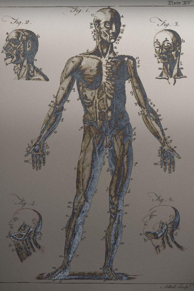 Rendered Bits Iphone4 Medical Wallpaper Å£ç´™ Å£çº¸ Medical Wallpaper Medical Art Wallpaper