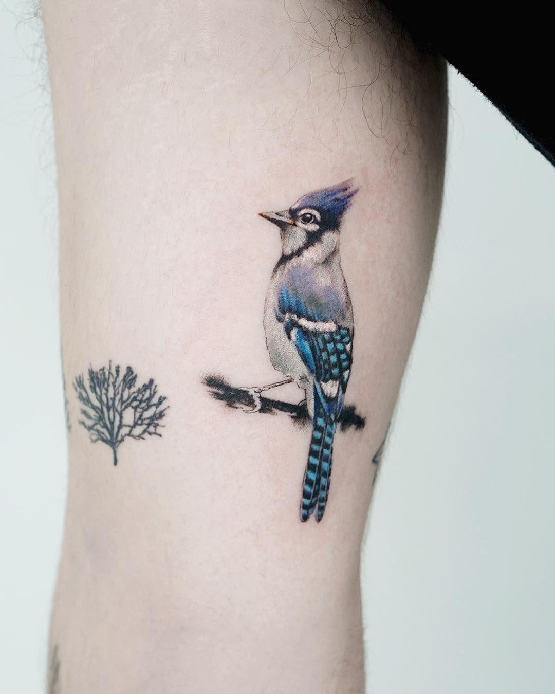 Simple Blue Jay Tattoo : simple, tattoo, Tattoo, Ideas, Tattoo,, Birds