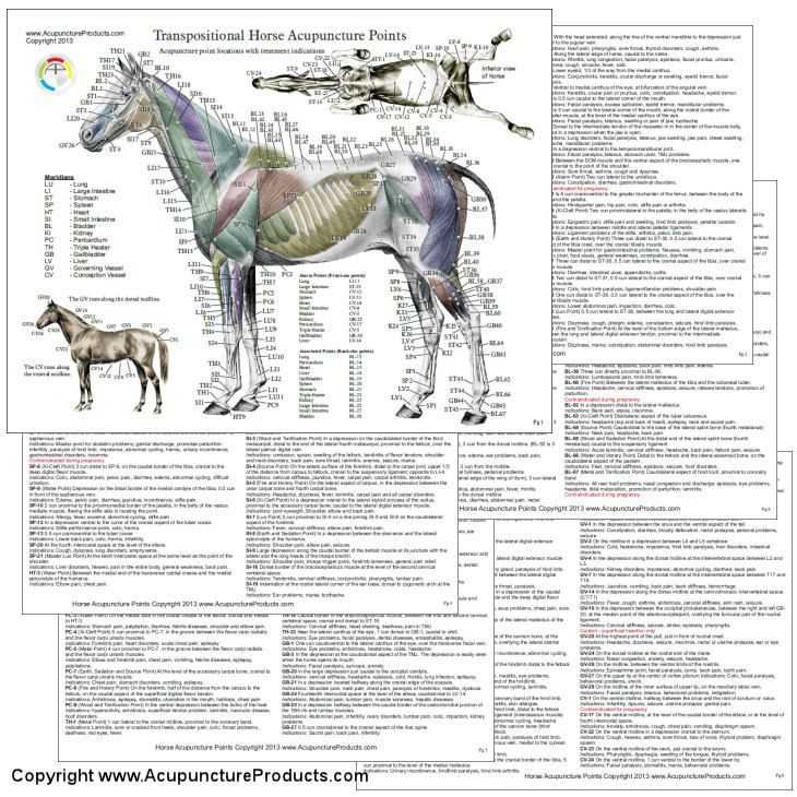 Horse Acupuncture 3 Chart Set 8.5\