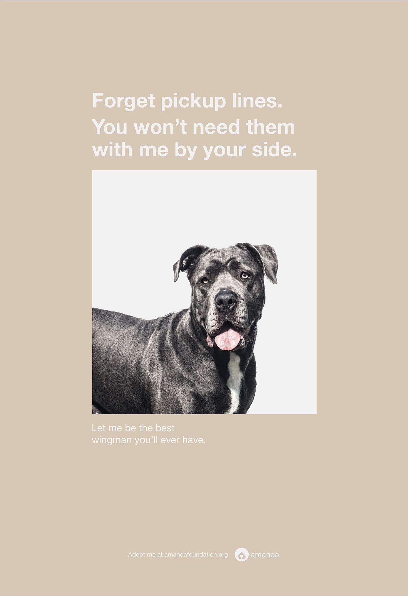 Amanda Foundation Mutt German Shepherd Mastiff Chihuahua Print 402185 Adeevee Jpg 1388 2023