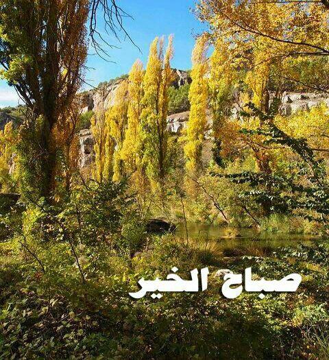 صباحكم خريف Picture Tree Poplar Tree Pictures Of Leaves