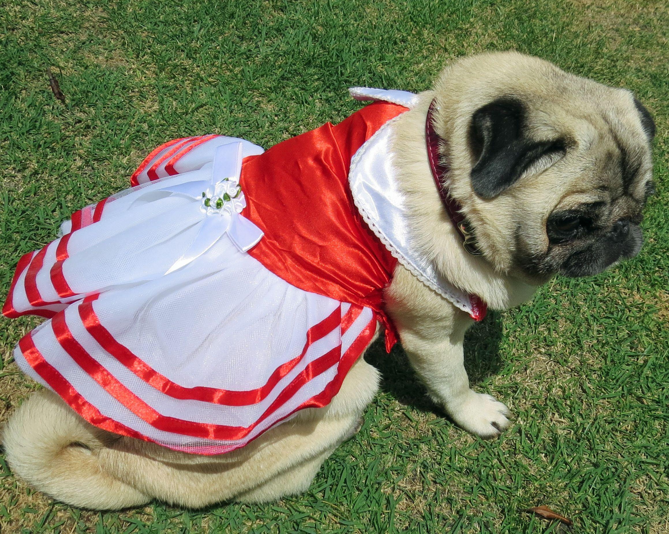 Vestido Para Cachorro Lindo