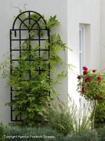 """Arched Top Steel Wall Trellis 6 h x 28"""" w brackets are 4"""" $618"""